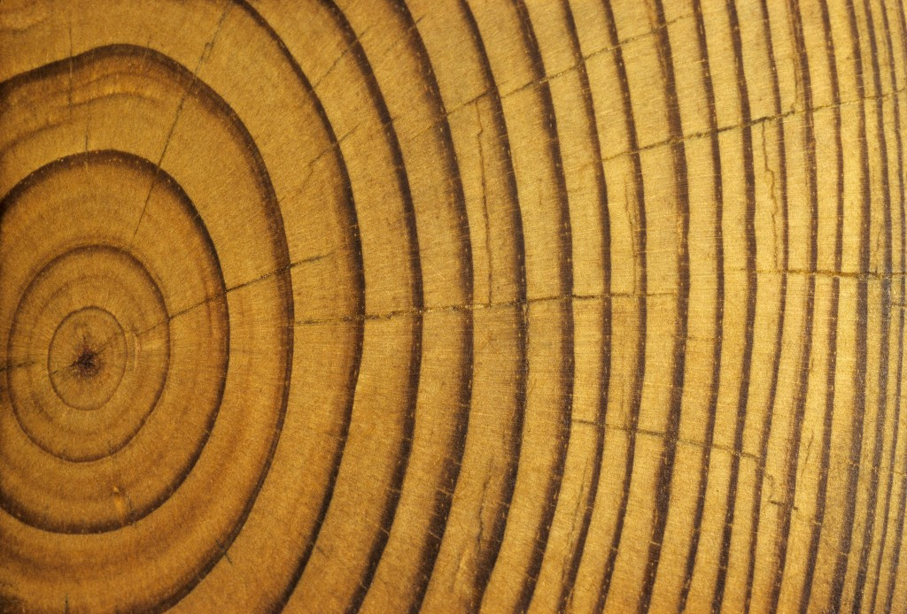This cross section of a pine tree shows annual rings. Photo by  Visuals Unlimited, Inc./Gerald & Buff Corsi and Getty Images