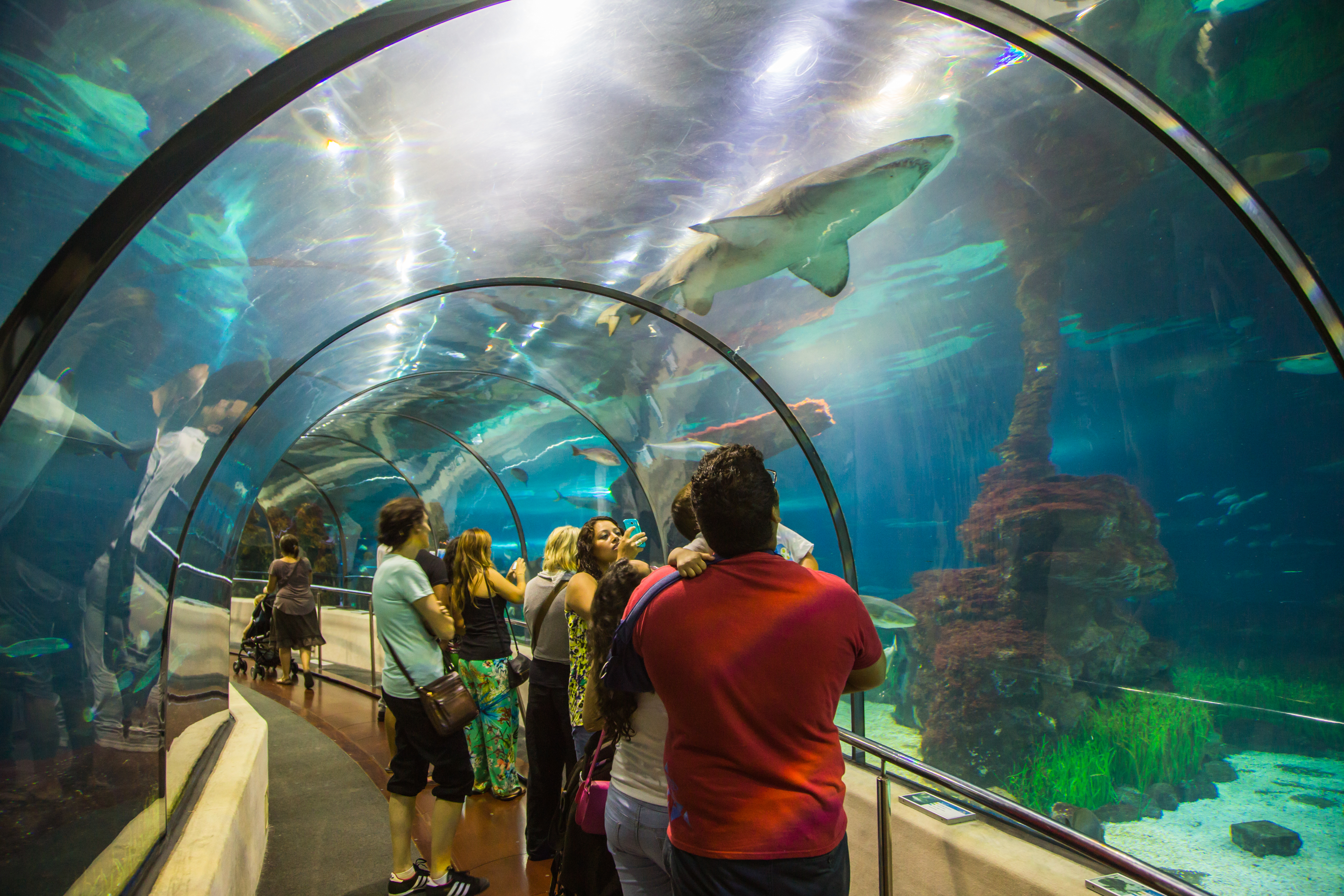 Barcelona's underwater tunnel aquarium with sharks and visitors in aquarium tunnel underwater scene. Photo by Artur Debat / Contributor, Getty Images