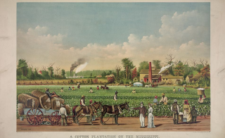 "The slave economy wasn't limited to the South, historian Sven Beckert shows in his new book, ""Empire of Cotton."" Above, ""A Cotton Plantation on the Mississippi"" lithograph published by Currier & Ives, 1884.  Courtesy of the Library of Congress."