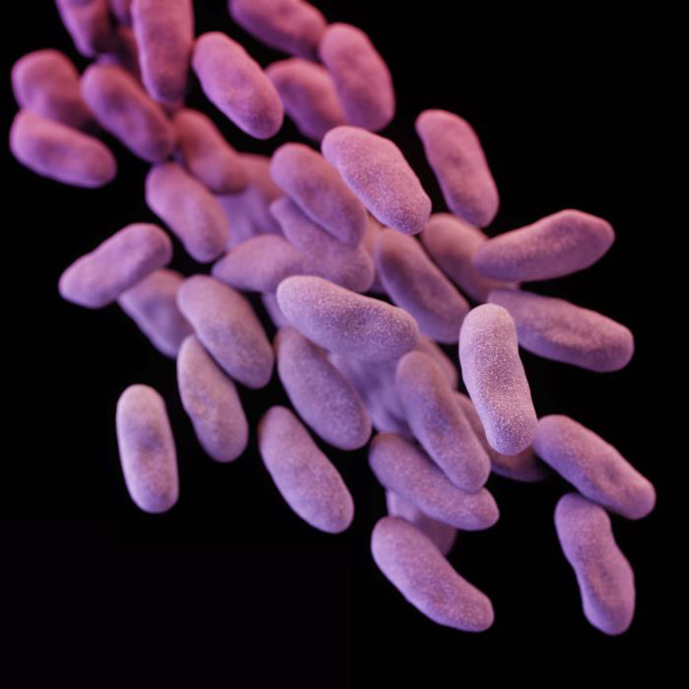 Carbapenem-resistant Enterobacteriaceae (CRE) bacteria is pictured in this medical illustration provided by the Centre of Disease Control and Prevention (CDC). The UCLA Health System said seven patients were infected with a potentially deadly, drug-resistant strain of bacteria and that nearly 200 more might have been exposed to it. Photo by Reuters.