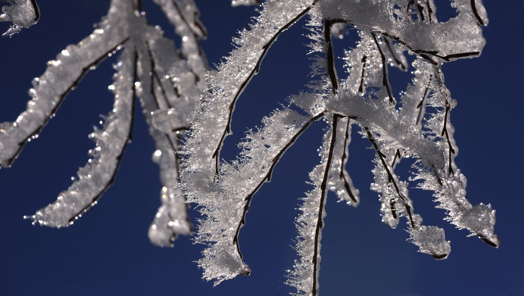 Ice covers branches in Holden, Maine, on Christams day. Photo by Gabor Degre/Bangor Daily News