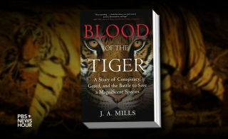bloodofthetigerbook