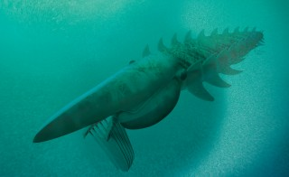 At seven feet long, the giant, filter-feeding anomalocaridid was one of the biggest arthropods to have ever lived. Illustration by Marianne Collins/ArtofFact