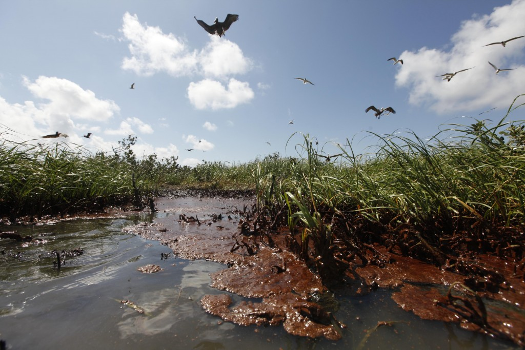 "Oil Comes Ashore Clumps of oil wash ashore on the island in Barataria Bay, May 22, 2010. ""I think we were all lulled into a sense of false hope that the oil maybe would just stay off shore,"" photographer Gerald Herbert says. (AP Photo/Gerald Herbert)"