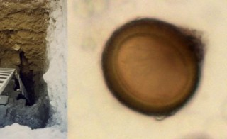 Researchers excavate the Jerusalem latrine (right), and a zoomed-in view of one of the tapeworm eggs that researchers found within the latrine. Photo by Jean-Baptiste Humbert (right) and Hui-Yuan Yeh (left).