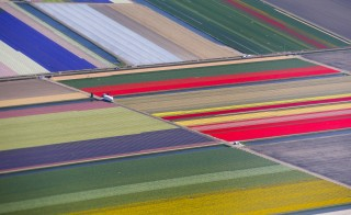 An aerial view of rows of flower fields near the Keukenhof park, also known as the Garden of Europe in the Netherlands. Photo: REUTERS/Yves Herman
