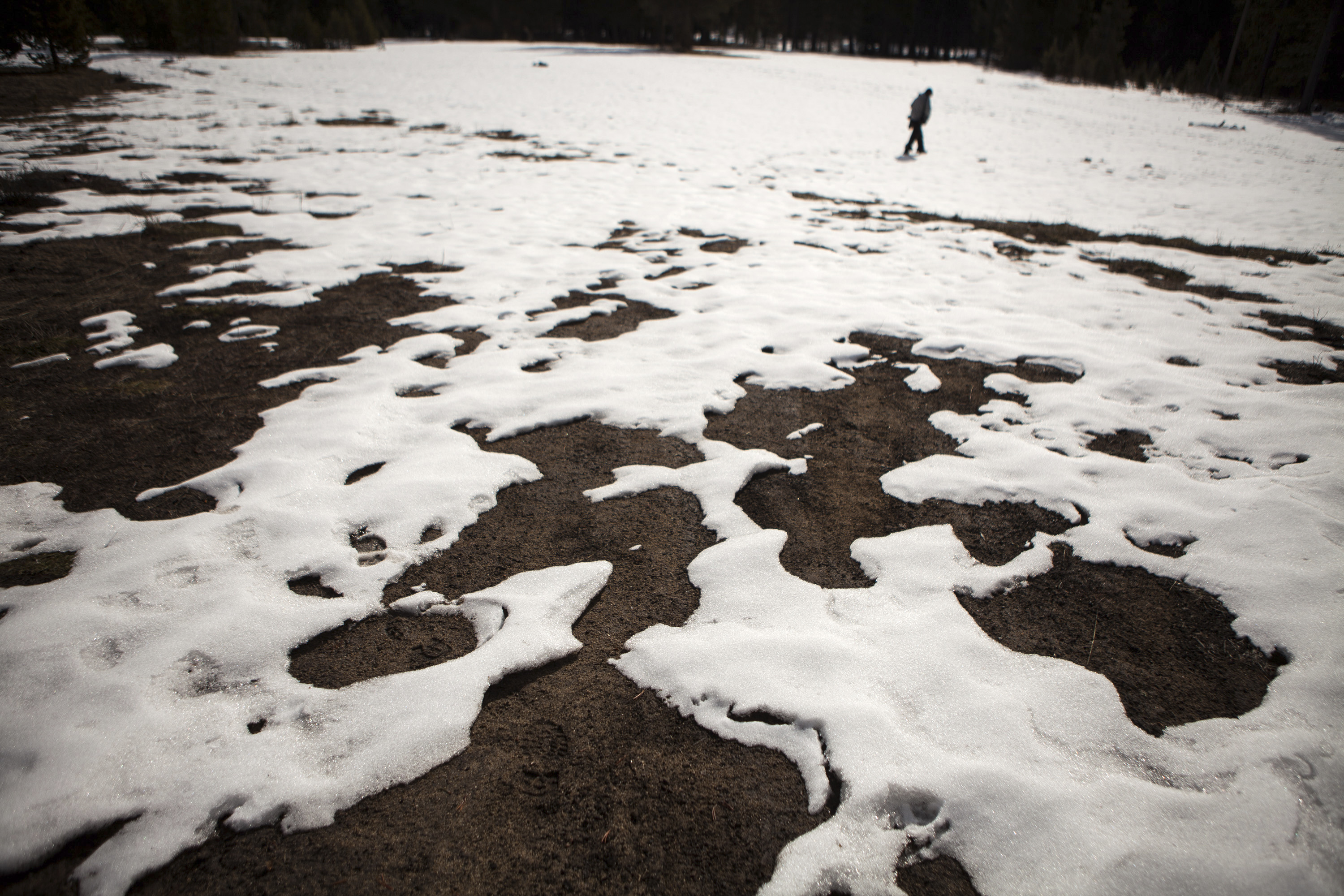 Patchy snow covers the meadow where the California Department of Water Resources measured the snowpack on January 29, 2015. Photo by Max Whittaker/Reuters