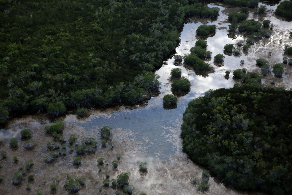 The landscape of the Everglades National Park, home to many endangered and rare plants, is seen from the air on March 16, 2015 in Miami. Photo by Joe Raedle/Getty Images