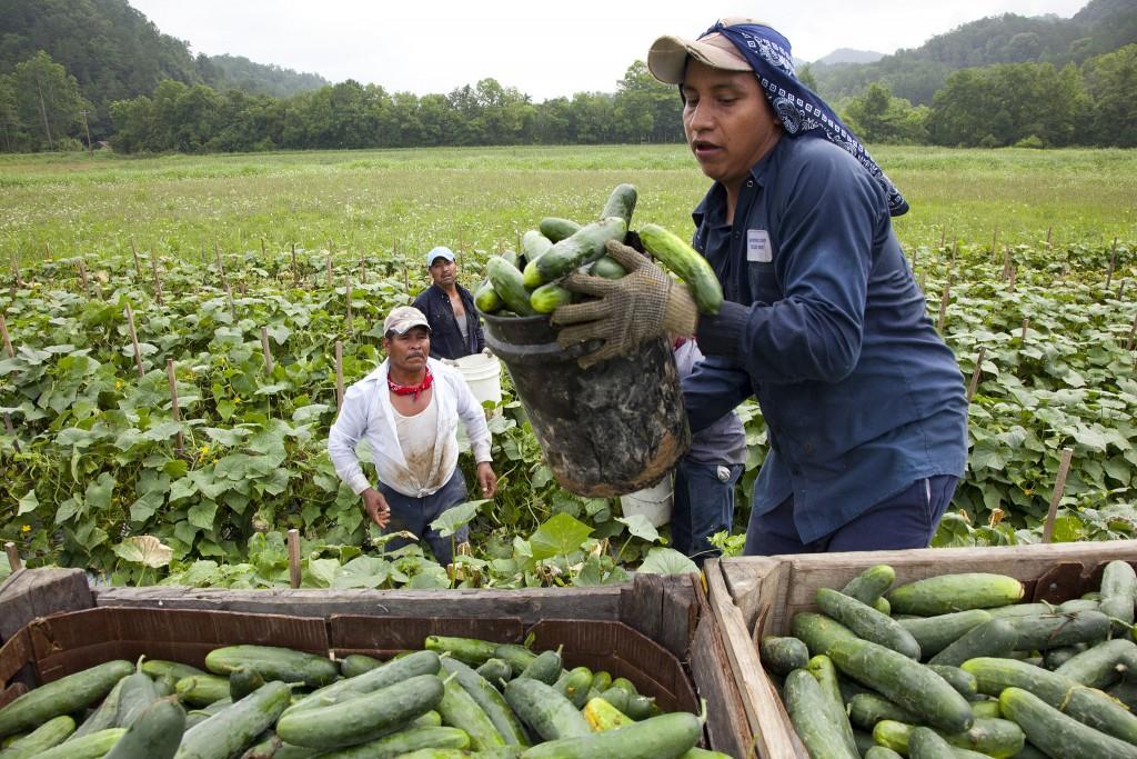 migrant workers essays