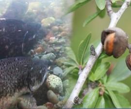 FISH VS NUTS monitor