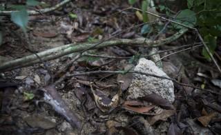 Human bones are seen near abandoned human trafficking camp in the jungle close the Thailand border at Bukit Wang Burma in northern Malaysia