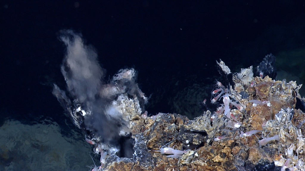 Hydrothermal shrimp and bacteria living near an active hydrothermal vent located southeast of the central Von Damm hydrothermal field in the Mid-Cayman Rise in 2011. Image courtesy of NOAA Okeanos Explorer Program, MCR Expedition 2011