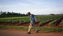 A man walks by a farm in San Antonio de los Banos, Cuba, on Saturday, Dec. 27, 2014. Cuba, which had been pushing to attract more foreign investment in agriculture even before U.S. President Obama's announcement normalizing relations, could become a significant market for companies like Caterpillar Inc. Photographer: Bloomberg