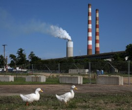 """NEWBURG, MD - JUNE 29:  Two white ducks walk along the beach at Aqualand Marina as emissions spew out of a large stack nearby at the coal-fired Morgantown Generating Station on the Potomac River on June 29, 2015 in Newburg, Maryland. Today the U.S. Supreme Court ruled against the Environmental Protection Agency's (EPA) effort to limit certain power plant emissions -- saying the agency """"unreasonably"""" failed to consider the cost of the regulations.  (Photo by Mark Wilson/Getty Images)"""