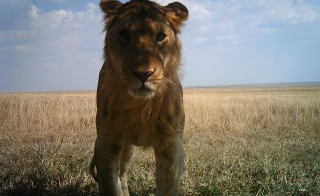Photo by Snapshot Serengeti
