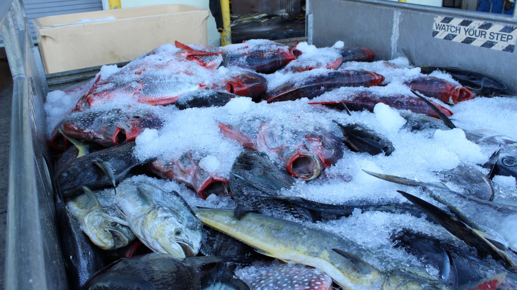 Fish caught to sell at the Honolulu Fish Auction in Hawaii. Photo by Tracy Wholf/NewsHour.