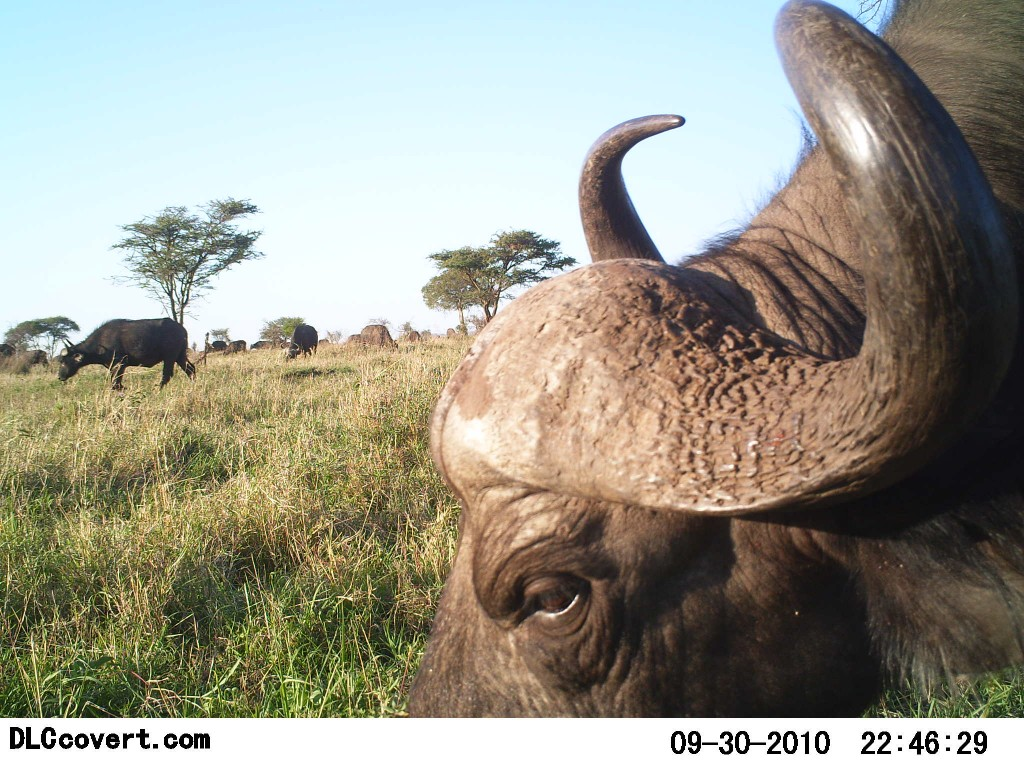 Photo by Snapshot Serengeti.