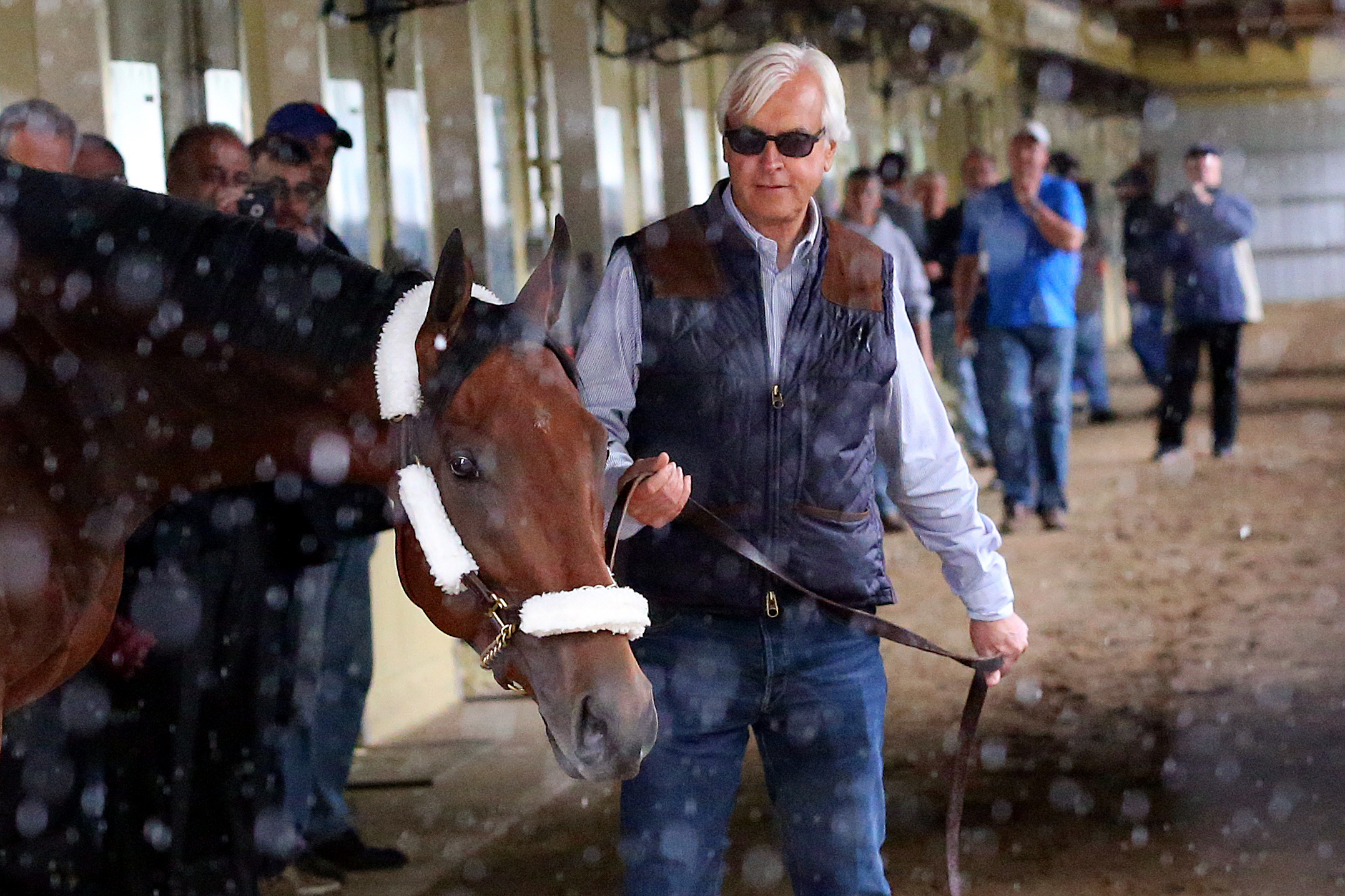 American Pharoah walks with trainer Bob Baffert at Belmont Park, June 2, 2015. Photo by Anthony Gruppuso/USA Today via Reuters
