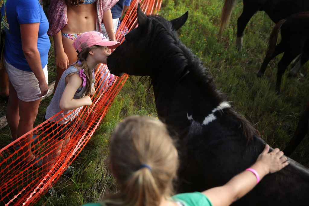 CHINCOTEAGUE, VA - JULY 29:  Seven-year-old Carlin Makibbin of Ocean City, Maryland, kisses a wild pony after ponies swam across the Assateague Channel during the annual pony swim event from Assateague Island to Chincoteague on July 29, 2015 in Chincoteague, Virginia. After crossing from the national wildlife refuge, some ponies are auctioned off by the Chincoteague Volunteer Fire Company during the 90th annual event. Photo by Alex Wong/Getty Images