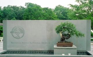 National Bonsai & Penjing Museun, Washington, DC A John Naka Japanese Black Pine bonsai graces the entrance to the National Bonsai and Penjing Mueseum at The United States National Arboretum. Photo by Flickr user Grufnik.