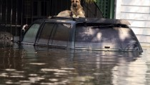 Two dogs sit atop an SUV in the Gentilly neighborhood of New Orleans, Louisiana September 6, eight days after Hurricane Katrina struck the region. Several private boats manned with New Orleans police, military police and medical personnel scoured the flooded streets in search of stranded residents. The White House is preparing a new emergency budget request for funding recovery efforts from Hurricane Katrina likely to be $40 billion to $50 billion, Senate Democratic Leader Harry Reid of Nevada said on Tuesday. PP05090090 REUTERS/Lee Celano  ljc/JJ - RTRMUKS