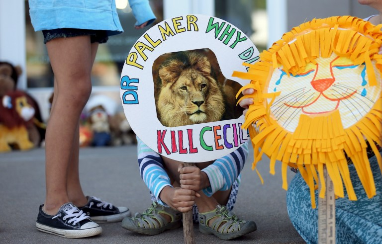 A girl holds a sign at the doorway of River Bluff Dental clinic in protest against the killing of an African lion in  Bloomington, Minn., on July 29, 2015. Zimbabwean officials cleared the Minnesota dentists responsible for the lion's death of any wrongdoing Monday. Photo by Eric Miller/Reuters