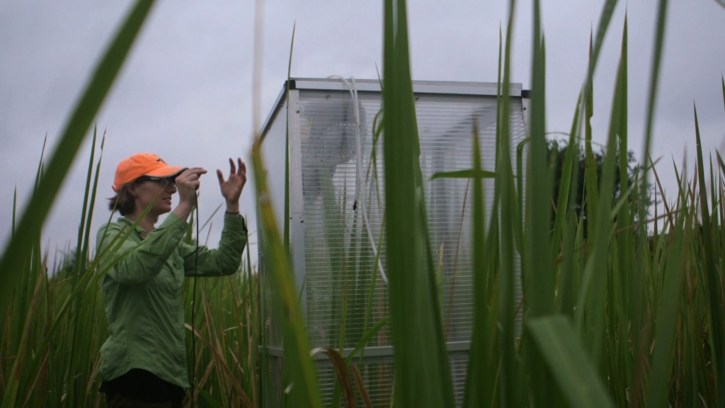 Ellen Herbert sets up a gas exchange chamber at SALTEx. By moving the six-foot chamber from plot to plot, she  measures how carbon exchange between marshes and the atmosphere is changing due to sea level rise. Photo by Mike Fritz