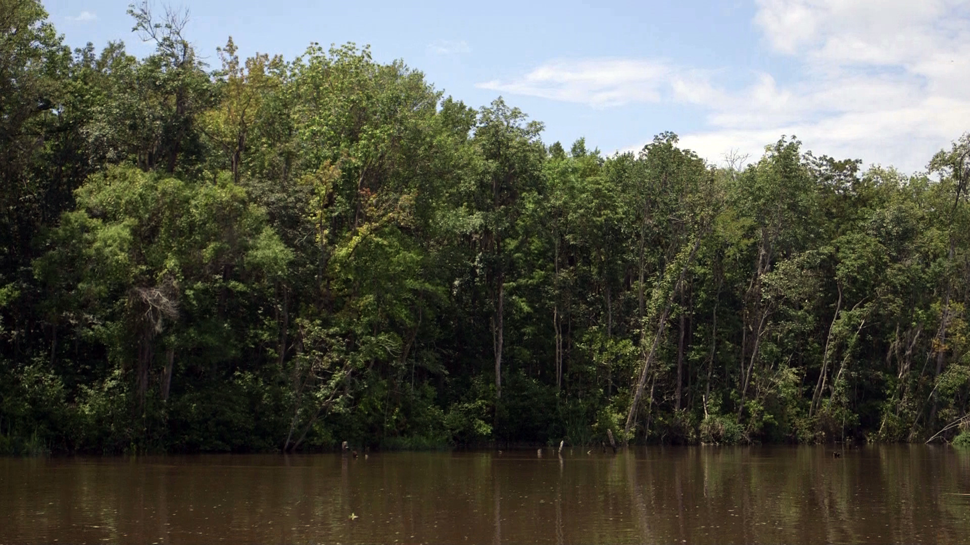 As you move inland along the Altamaha river, freshwater forest replaces the marshes. Photo by Mike Fritz.