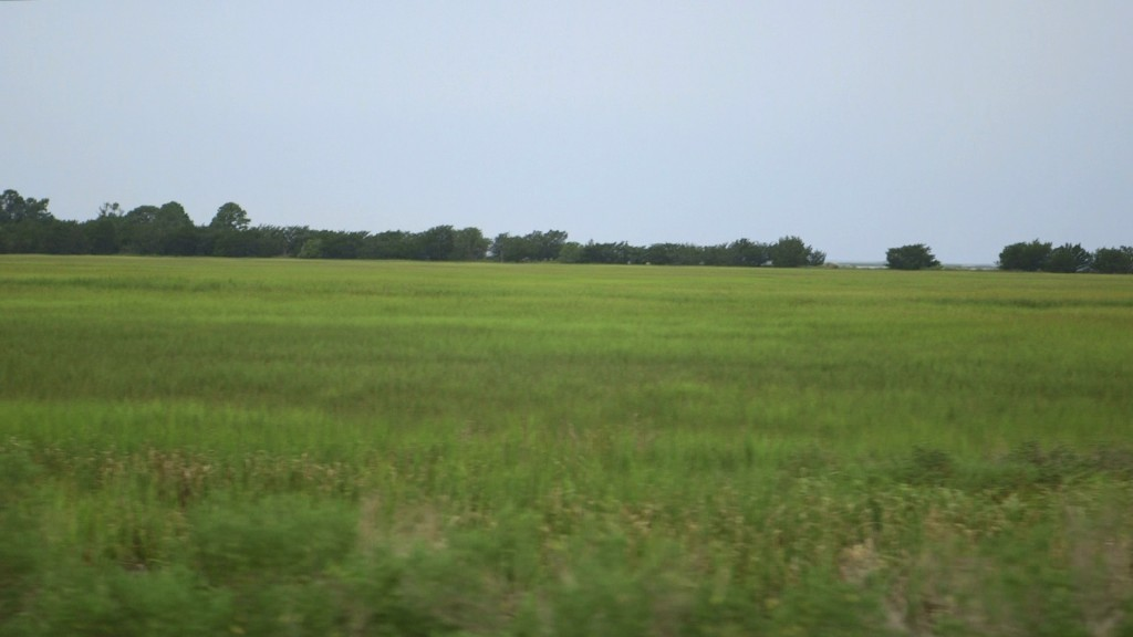 Marsh on Sapelo Island. Photo by Mike Fritz