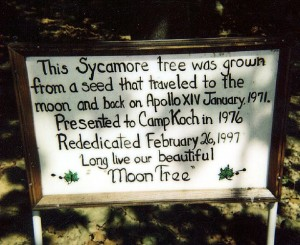 Sycamore, Sweetgum and Redwood Moon Trees (trees whose seeds traveled to the moon aboard Apollo 14), were planted throughout the U.S. following the 1971 mission. Photo by