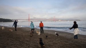 SAN FRANCISCO, CA - DECEMBER 14: The Golden Gate Bridge can be seen behind Crissy Field as people walk their dogs along the beach on December 14, 2009 in San Francisco, California. Crissy Field was originally an airfield that was part of the Presidio Army Base before it closed in 1974. (Photo by Jason Andrew/Getty Images)