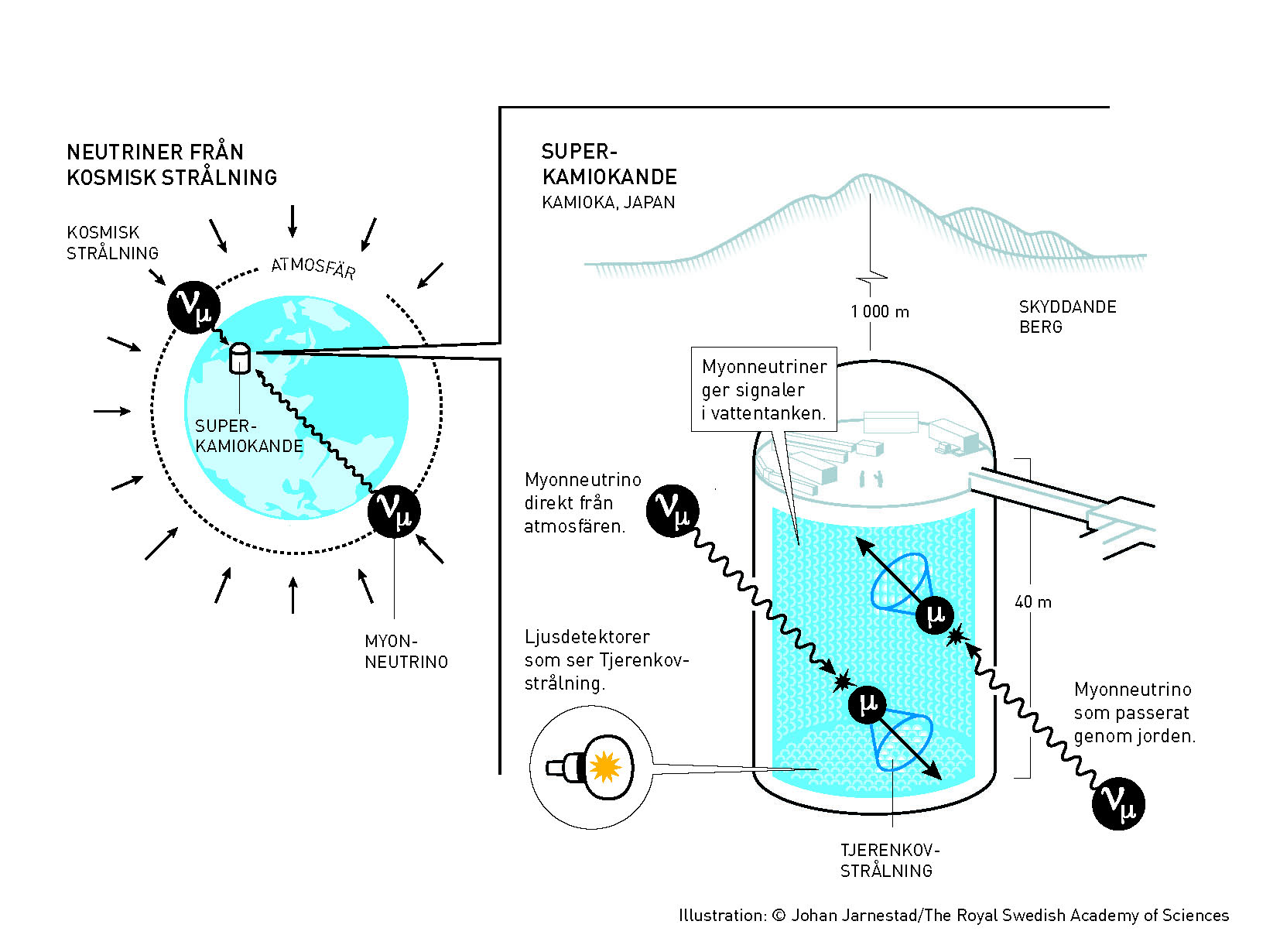 """""""Super-Kamiokande is a gigantic detector built 1,000 metres below the Earth's surface. It consists of a tank, 40 metres high and as wide, filled with 50,000 tonnes of water. The water is so pure that light beams can travel 70 metres before their intensity is halved, compared to just a few metres in an ordinary swimming pool,"""" The Nobel committee wrote. """"Every now and then, a neutrino collides with an atomic nucleus or an electron in the water. These collisions create charged particles – muons from muon-neutrinos and electrons from electron-neutrinos. Around the charged particles, faint flashes of blue light are generated. This is Cherenkov light, which arises when a particle travels faster than the speed of light. The shape and intensity of the Cherenkov light reveals what type of neutrino it is caused by, and from where it comes.""""  Photo by The Royal Swedish Academy of Sciences."""