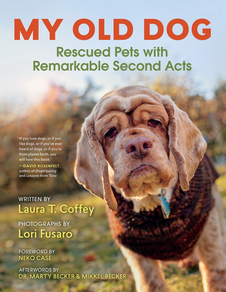 """My Old Dog: Rescued Pets with Remarkable Second Acts"" features quite a character: Stacie, a female cocker spaniel rescued by the group Old Dog Haven in Washington state. Photo by New World Library"