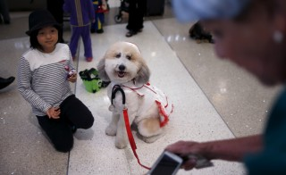 A therapy dog wears a nurse Halloween costume as part of a program to de-stress passengers at the international boarding gate area of LAX airport in Los Angeles, California, United States, October 27, 2015. REUTERS/Lucy Nicholson - RTX1TJPR
