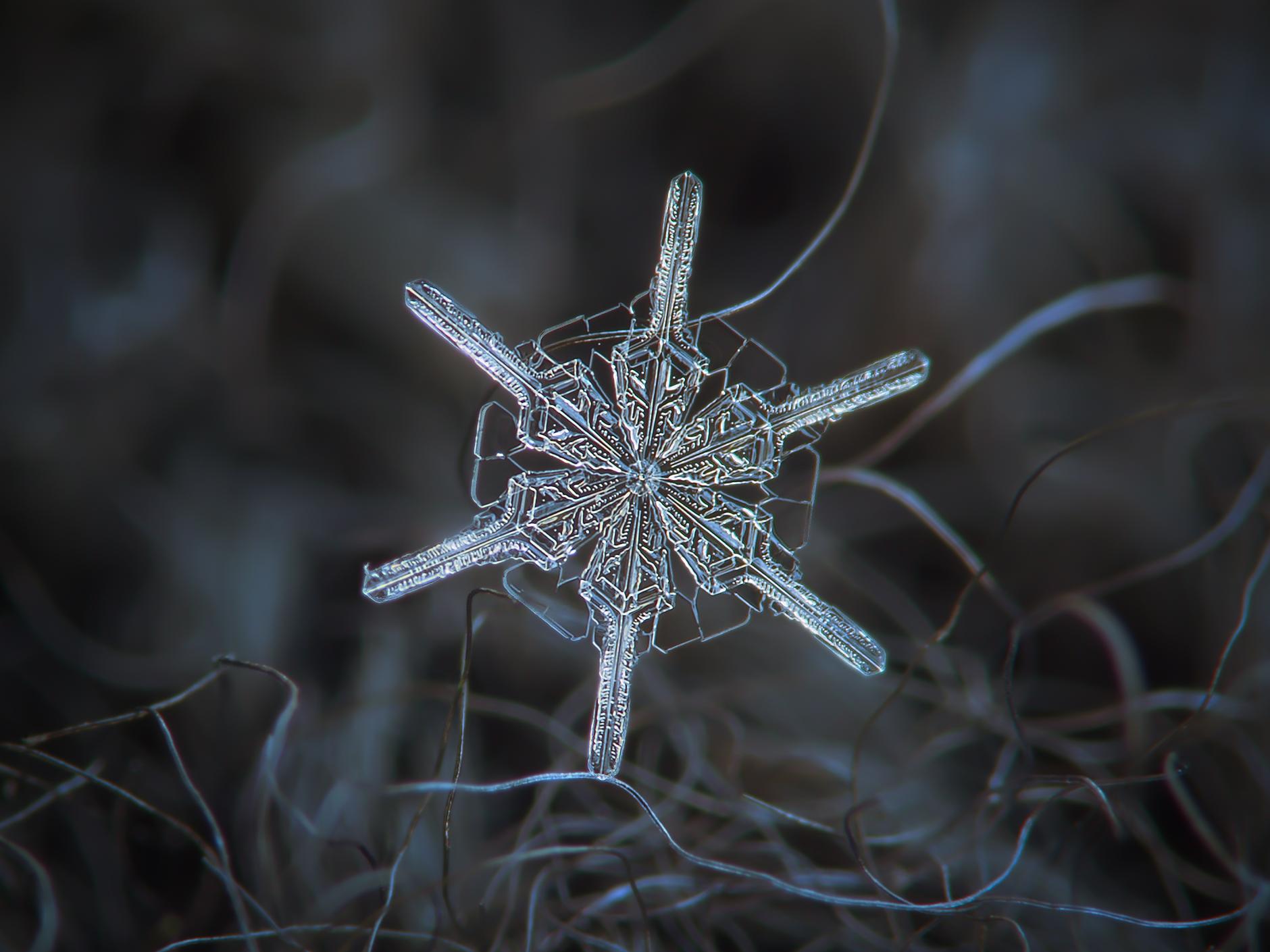 snowflake92
