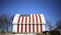 A cow stands in front of barn painted with a U.S. flag in Homestead, Iowa, March 7, 2015. Iowa, the American heartland. Endless farm fields and quiet towns. 56,273 square miles that is the focus of the nation as the long process of electing the next U.S. president begins. Photo by Jim Young/Reuters