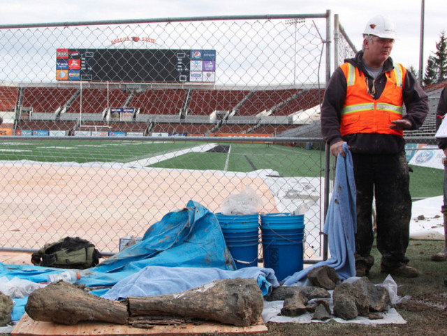 Oregon State University's Loren Davis was on site after the discovery of mammoth bones under Reser Stadium Monday. Photo by Theresa Hogue