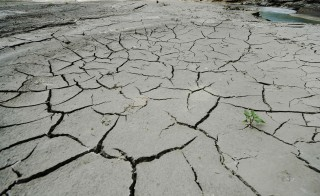 A small plant is seen at the coast of the drought-stricken Debar Lake west of Skopje, Macedonia. Photo by Ognen Teofilovski/Reuters