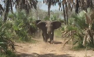 Sen. Jeff Flake tweeted: These elephants have no respect for a fellow Republican. No respect I tell ya. #Gorongosa #EndWildlifeTrafficking