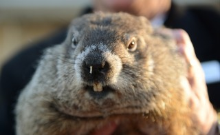 Punxsutawney Phil, a famed U.S. groundhog with an even more famous shadow, emerged from his burrow on Tuesday and predicted an early spring on Feb. 2. Photo by Alan Freed/Reuters
