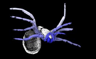X-ray-based reconstruction of the spiderlike arachnid Idmonarachne brasieri. Photo courtesy of Garwood RJ et al., Proc. R. Soc. B, (2016)