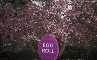 WASHINGTON, DC - MARCH 26: Signage for Monday's Easter Egg Roll is set up on the South Lawn of the White House, March 26, 2016 in Washington, DC. President Obama played golf at Andrews Air Force Base on Saturday afternoon. (Photo by Drew Angerer/Getty Images)