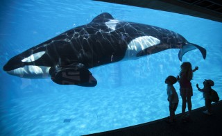 Young children get a close-up view of an Orca killer whale during a visit to the animal theme park SeaWorld in San Diego, California March 19, 2014   REUTERS/Mike Blake   (UNITED STATES - Tags: ANIMALS ENVIRONMENT SOCIETY TRAVEL TPX IMAGES OF THE DAY) - RTR3HTBE