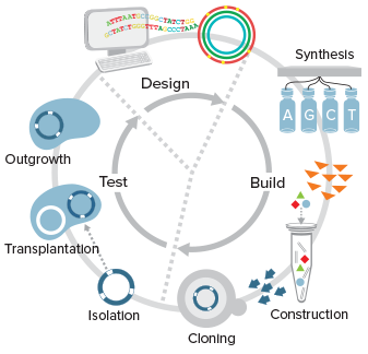 Steps in creating Syn 3.0. Major advances in DNA technologies have made it possible for biologists to now behave as software engineers and rewrite entire genomes to program new biological operating systems. Illustration and caption by J. Craig Venter Institute