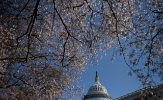 Trees in bloom are seen in front of the Capitol dome March 29, 2016 in Washington, DC. Photo by Brendan Smialowski/AFP/Getty Images