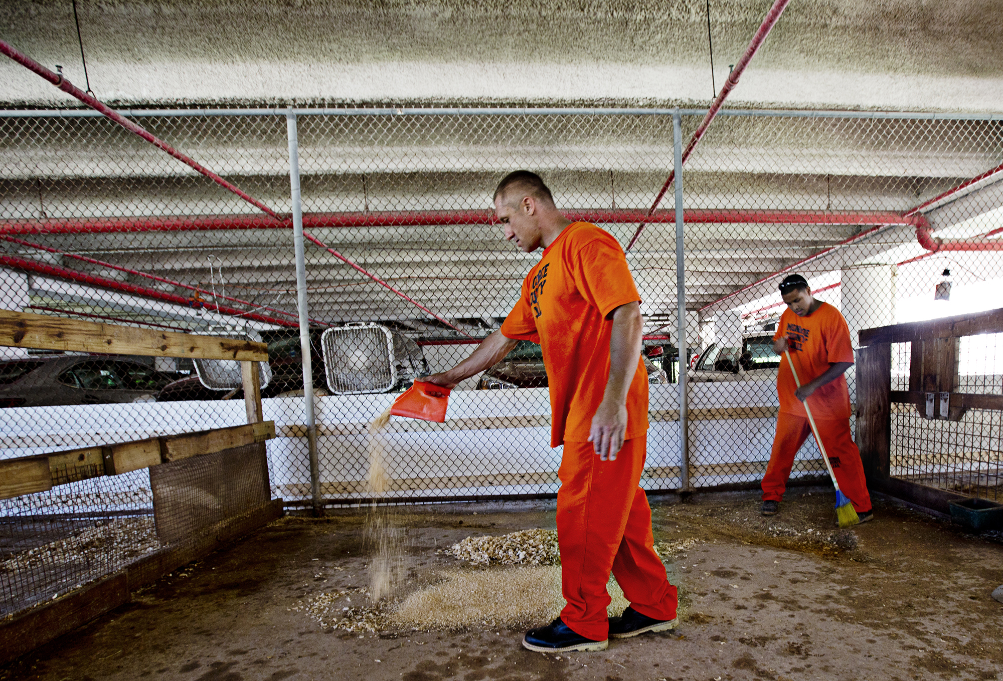 Inmates Orlando Gonzalez and Michael Smith clean out animal pens at the Monroe County Sheriff's Office Animal Farm that is located on the grounds of the detention center. Photo by Kim Raff