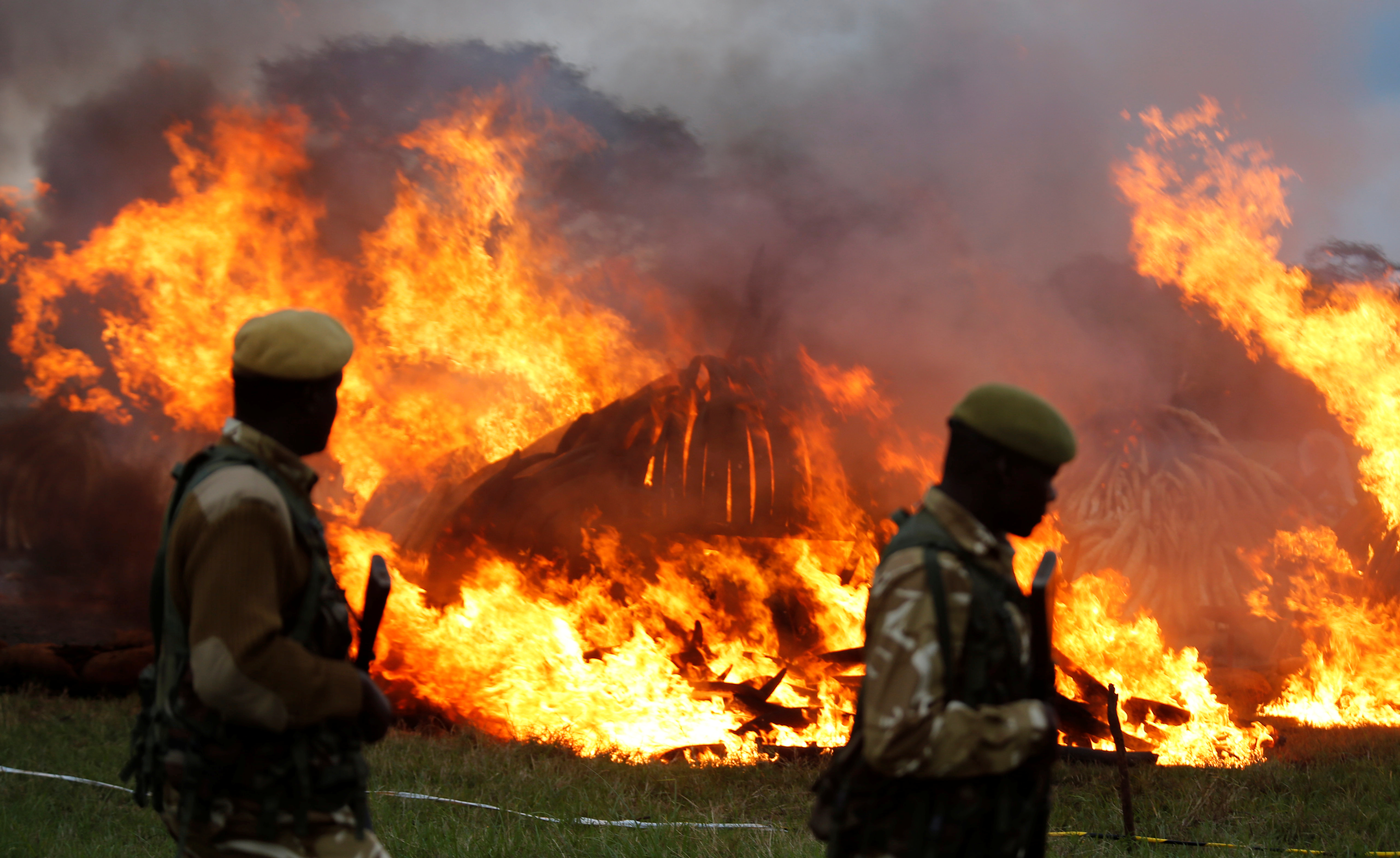 Kenya Wildlife Services rangers patrol as they guard the burning of an estimated 105 tonnes of Elephant tusks confiscated ivory from smugglers and poachers at the Nairobi National Park near Nairobi, Kenya, April 30, 2016. REUTERS/Thomas Mukoya - RTX2C956