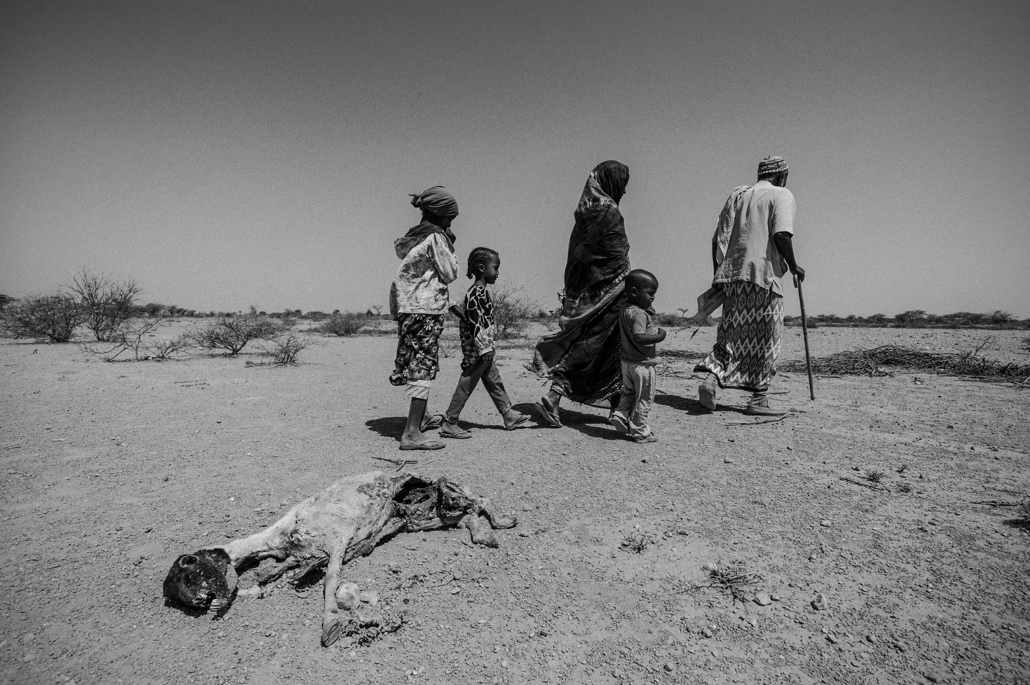 A family passes one of many dead goats as they look for water in Somaliland. Photo by Sebastian Rich for UNICEF