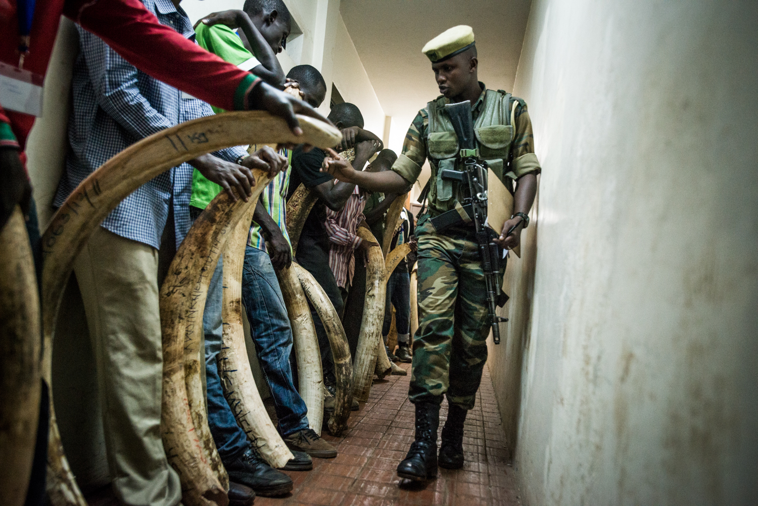 The elephant tusks are assessed and cataloged at the Kenya Wildlife Service. Photo by Mia Collis for the Kenya Wildlife Service