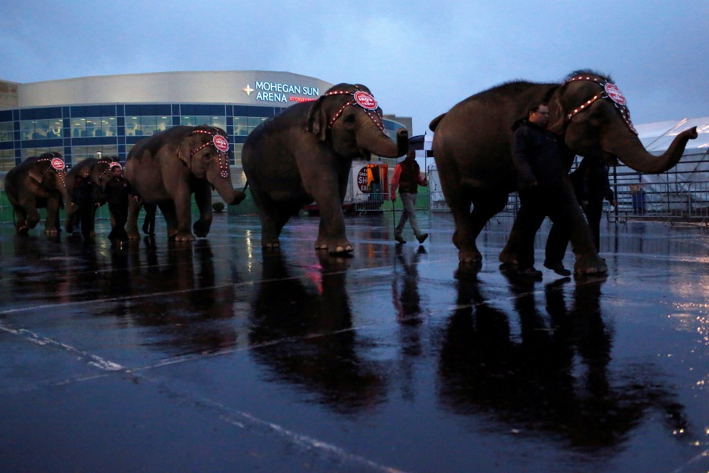 "Elephants are led back to their tent following a performance at Ringling Bros and Barnum & Bailey Circus' ""Circus          Extreme"" show at the Mohegan Sun Arena at Casey Plaza in Wilkes-Barre, Pennsylvania, U.S., April 29, 2016.  Photo by          Andrew Kelly/Reuters"